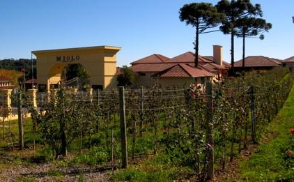 Miolo Brazil Wine