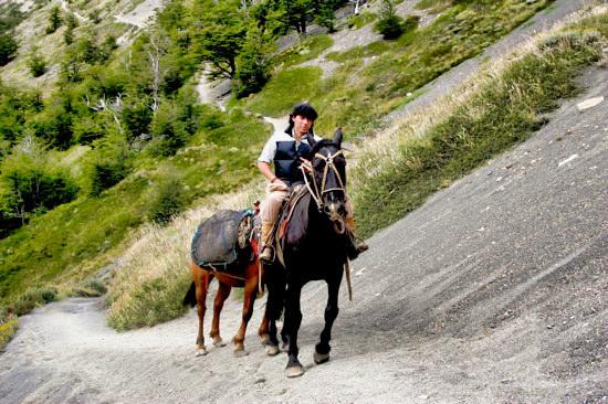 Mirador Horse Donkey