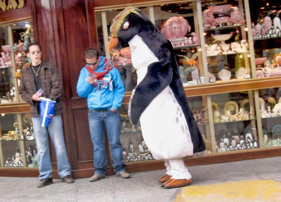 Ushuaia Penguin Tourist