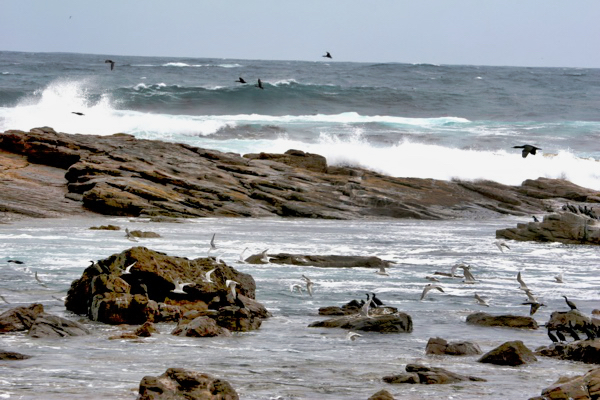 Waves Crashing Cape Goodhope