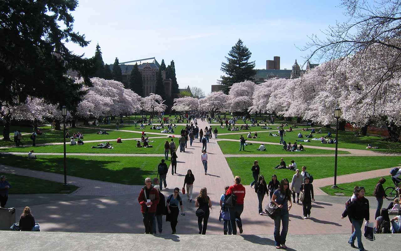 University Of Washington Scholarships >> University Of Washington Scholarships 2019 2020 Shandisa Zvino