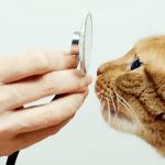 mejores escuelas de veterinaria