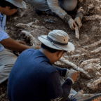 Learn The Difference Between Archeology And Paleontology