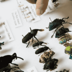 Why You Should Choose Entomologist As Your Future Career?