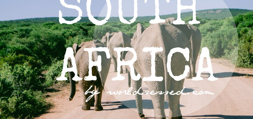 Live the Search: Addo Elephant Park