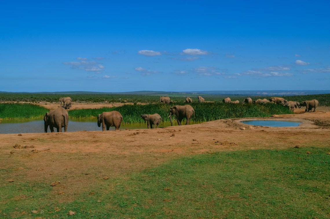 addo-elephant-park-12