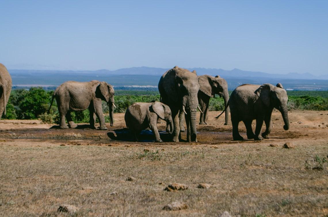 addo-elephant-park-28