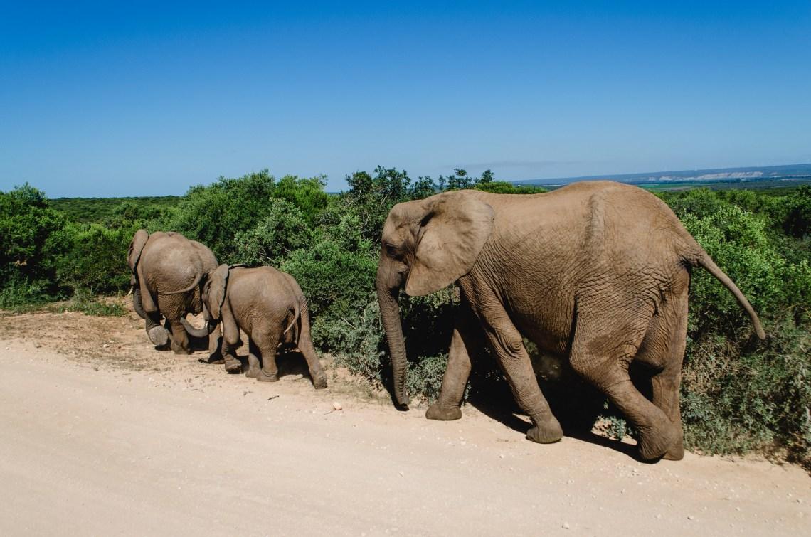 addo-elephant-park-29