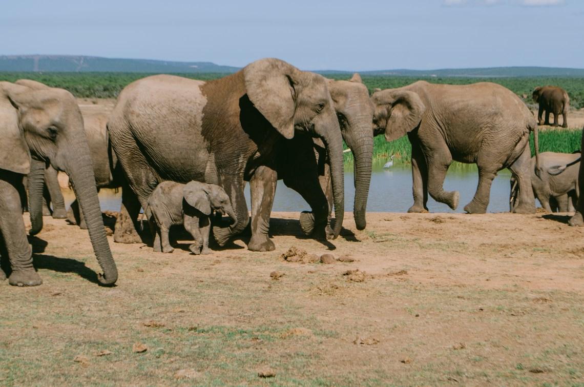 addo-elephant-park-8