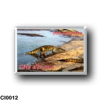 CI0012 Africa - Ivory Coast - Yamoussoukro - Crocodile marchant