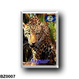 BZ0007 America - Belize - Belizean jungles - The Jaguar
