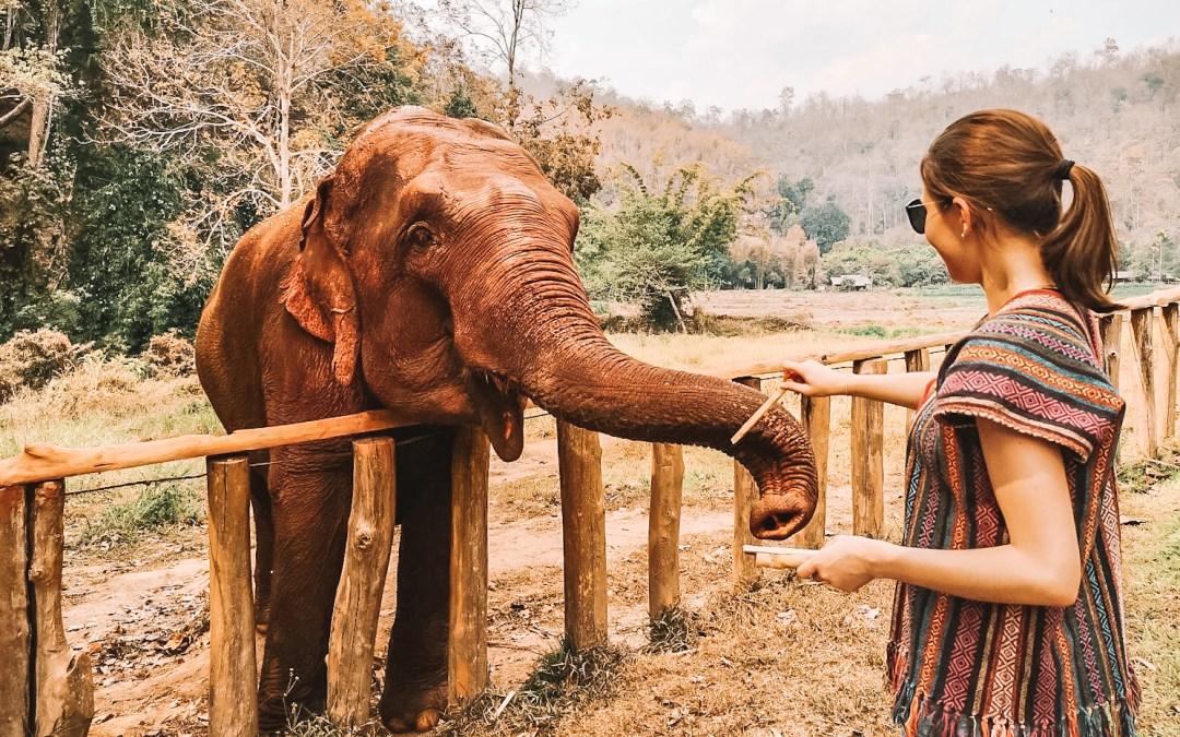 Ein Tag mir 3 Elefanten Damen – ein Erlebnis, dass Zoobesuche langweilige werden lässt