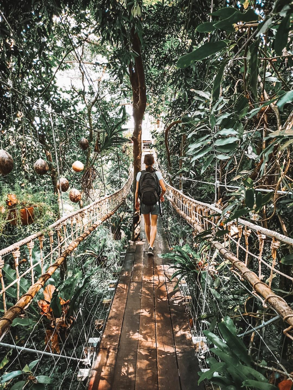 20200226-koh-samui-thailand-tree-bridge