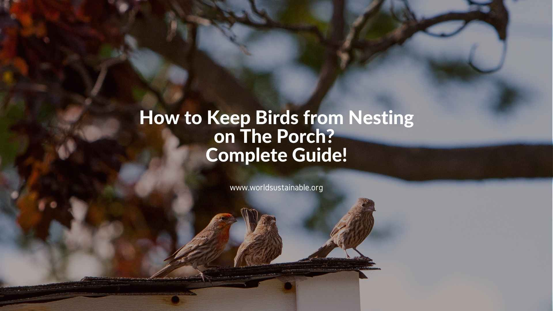how-to-keep-birds-from-nesting-on-the-porch