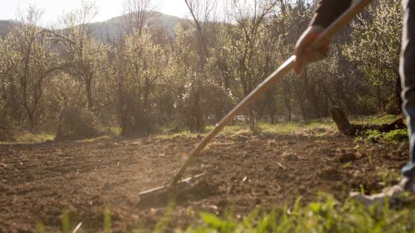 dig-up-your-soil