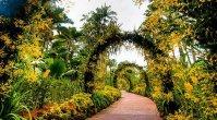 National Botanic-Orchid Garden - Singapore
