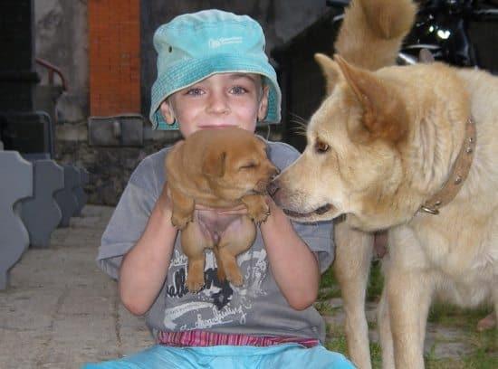 Travel Vacinations Rabies