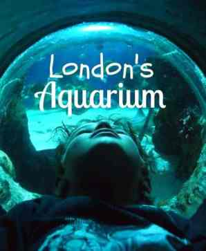 London Aquarium review. Sea Life London Family Travel BlogLondon aquarium review World Travel Family