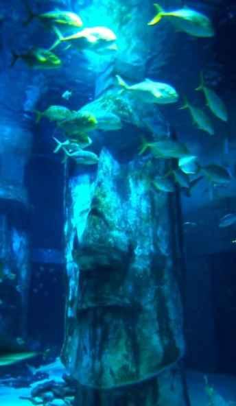 London aquarium shark tank review