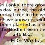 Sri Lanka's 2000 Year Old Sacred Tree and Getting to Anuradhapura