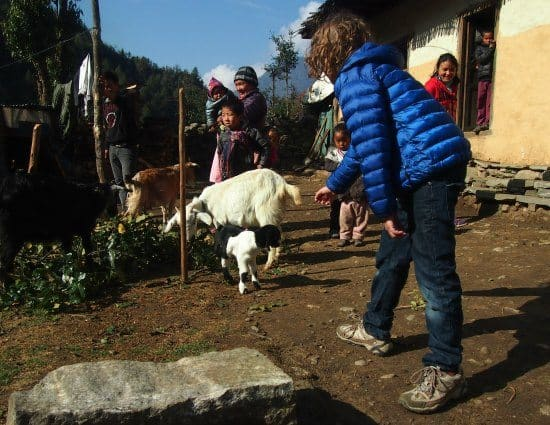 Nepal with kids, trekking with kids. Animals in the mountains