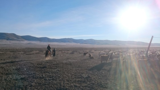 Riding in the Mongolian Steppe - what a dream!