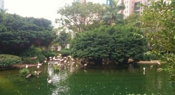 Kowloon Park with flamingos