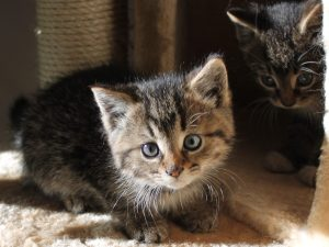 two kittens peaking out from cat perch