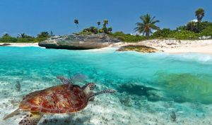 brown turtle swims towards tropical beach on sunny day