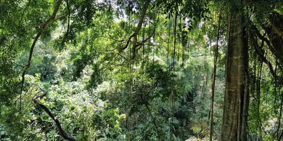 Ubud 3 day itinerary - Monkey Forest