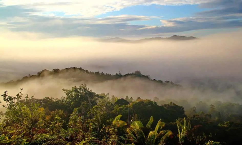 Long haul adventure holidays in July - shows the vast jungles of Borneo from above
