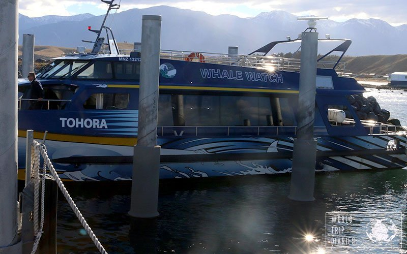 whale watch boat