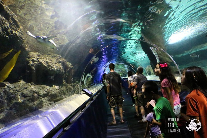 Awesome shark tunnel and the green turtle