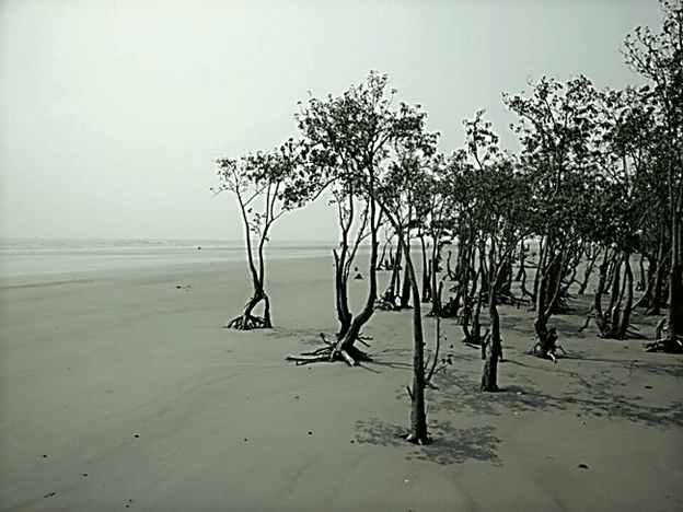 Henry Island beach in West Bengal