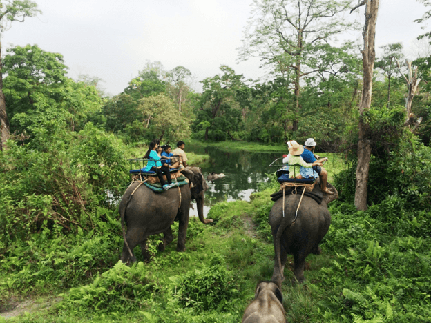 One of the Best place to travel in West Bengal is Jaldapara Wildlife Sanctuary