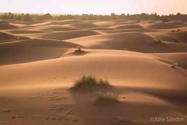 Sahara trip
