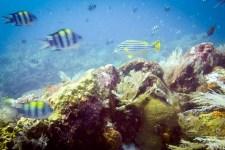 Bali_diving_2016_30