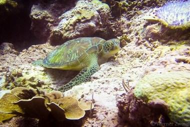 Turtle nap