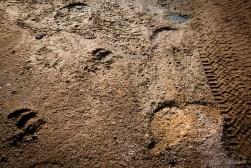 """Footprints"" of an elephant, a giraffe and us"