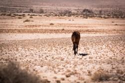 WIldhorse-Aus