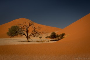 Landscape with dune