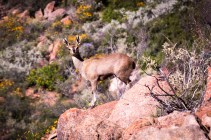 south-africa-western-cape-2016-40