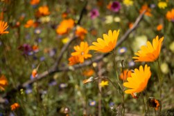 south-africa-western-cape-namaqualand-2016-22