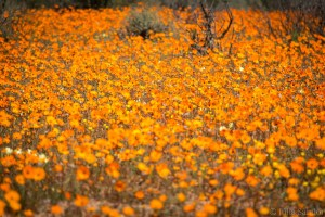 Namaqualand view