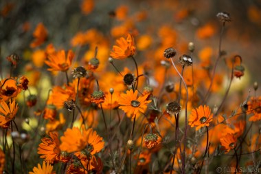 south-africa-western-cape-namaqualand-2016-35