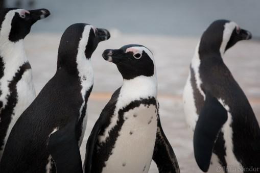 Penguins talk