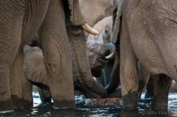 Curious elephant baby