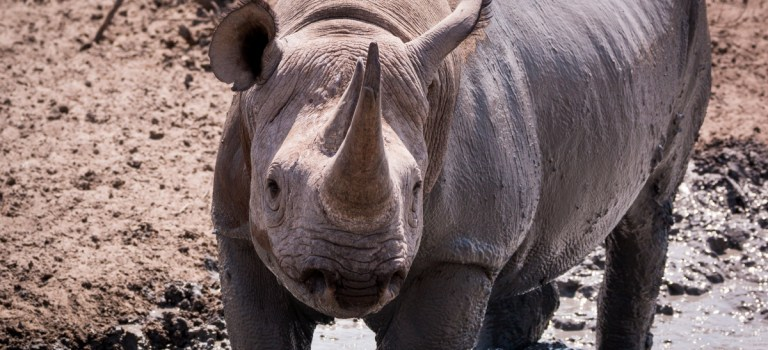 The fifth of the Big 5 of Africa
