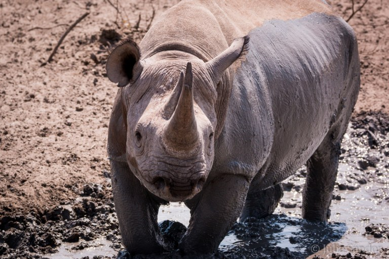 Our first rhino