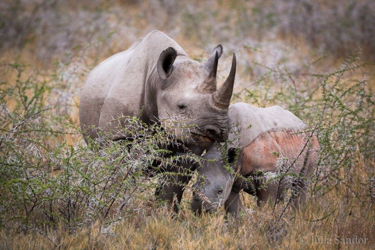 "Rhino ""baby"" with his mother"